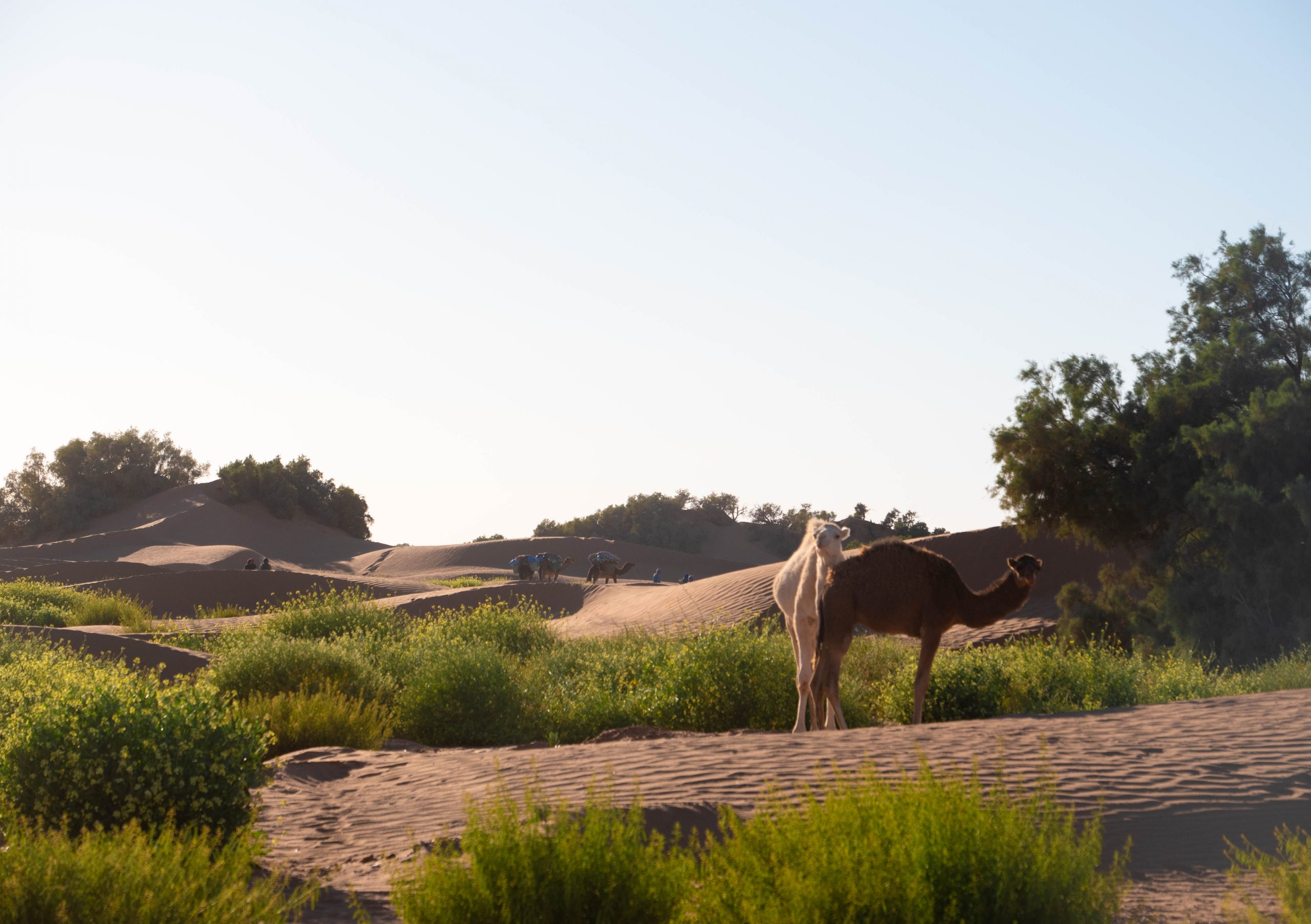 tour in marocco trekking