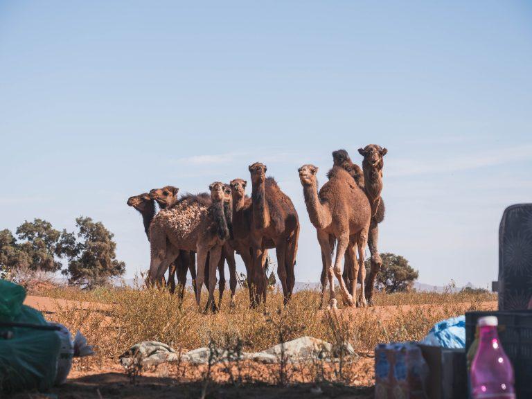 trek deserto mhamid